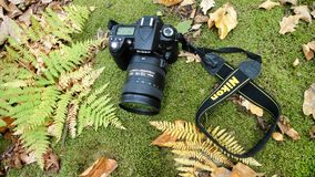 The camera in the fall Stock Photography