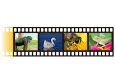 Camera film strip. Camera strip with different photographs on it Royalty Free Stock Photos