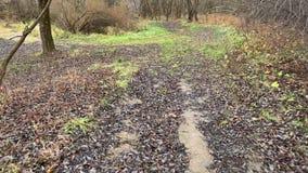 Autumn grove stock video