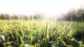 Camera flight over green grass. stock footage