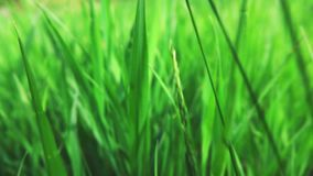 Camera fly through green fresh grass, slow motion stock footage