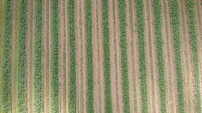 Camera is flying over sown fields in Tuscany region in Italy in spring morning, shadows from clouds are moving. Agricultural meadow stock video