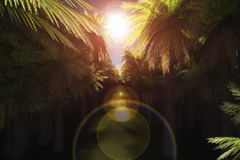 Camera flying through a plantation of palm trees,Alpha included, stock footage Royalty Free Stock Photos