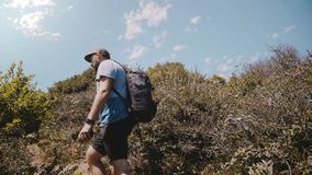 Camera follows happy tourist man with photographer backpack hiking among beautiful lush green bushes on a sunny mountain. Atmospheric shot of young male stock video
