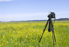 Camera in the grasslands Royalty Free Stock Images