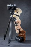 Camera and group of teddy bears isolated. On grey background royalty free stock photos