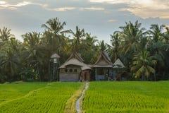 Camera indonesiana nelle risaie di Ubud, Bali, Indonesia Immagine Stock