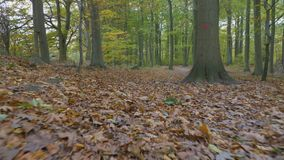 Camera motion along the leaves in the forest. A autumn day stock footage