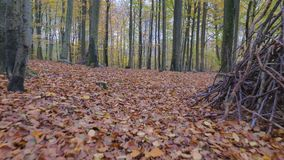 Camera motion along the leaves in the forest. A autumn day stock video footage