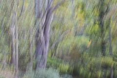 Brushed Woodlands. Camera motion creates an abstract, painting-like woodland scene royalty free stock photos