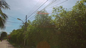 Camera on Motorbike Moves along Palms Trees in Blossom stock video footage