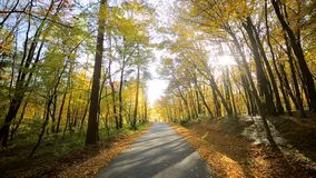 Camera movement in front. Autumn park with colorful beautiful trees, autumn yellow leaves on a sunny day. Camera movement in front. Autumn park with colorful stock video footage
