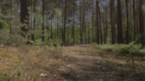 The camera moves above the ground and flies over the lying tree. Lying tree in the path of the camera. Difficulties on stock footage
