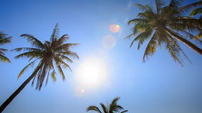Camera Moves across Palms from Downward Bright Sun Blue Sky. Camera moves across high palms from downward against bright white sun and blue sky stock video footage