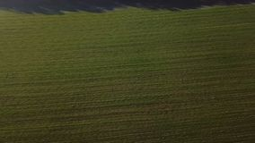 Camera moves along an agriculture striped green field. Video footage. Aerial view from above. Morning nature sun stock footage