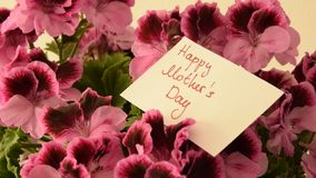 Camera moves along beautiful fresh flowers with greeting card for Mother`s day