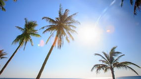 Camera Moves along Palms from Downward Bright Sun Blue Sky. Camera moves along high palms from downward against bright white sun and blue sky stock video