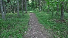 Camera moves along the path in the forest from the first person view.  stock video footage