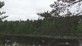 The camera moves along the pines growing on the stony river bank.  stock video footage