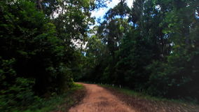 Camera Moves along Shadow Ground Road in Tropical Forest. Camera moves along shadow ground road in thick tropical forest against blue sky stock video