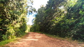 Camera Moves along Shadow Ground Road in Tropical Forest. Camera moves along shadow ground road in thick tropical forest against blue sky stock footage