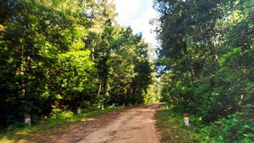Camera Moves along Shadow Ground Road in Tropical Forest. Camera moves along shadow ground road in thick tropical forest against blue sky stock video footage