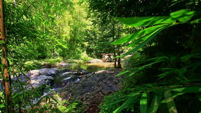 Camera Moves along Shady River Bank in Jungle. Closeup camera moves along narrow shady path past mountain river bank in thick jungle stock footage