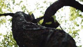 Camera moves around the tree. stock video footage