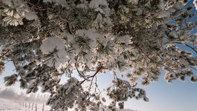 Camera moves from the bottom up and remove tree branches covered with snow. stock footage