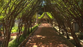 Camera Moves Through Decorative Tree Tunnel Specially Grown stock video