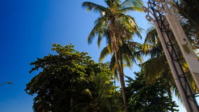 Camera moves fast past large palm tops against sky. Camera moves fast past large palm tops against azure sky wind shakes palm branches in Vietnamese resort city stock video