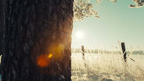 Camera moves at the left on the right removing trunks of trees and the field covered with snow. Winter landscape video stock footage