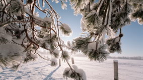 Camera moves from left to right and takes a winter landscape with tree branches and a field. stock footage