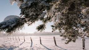 Camera moves from left to right and takes a winter landscape with tree branches and a field. stock video footage