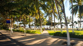 Camera moves past tropical plants beach on background stock footage