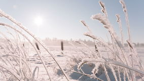 Camera moves from right to left removing the frozen grass in a big field. Winter landscape video stock video footage