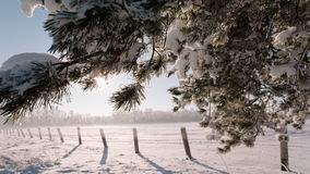 Camera moves from right to left and takes a winter landscape with tree branches and a field. stock video footage