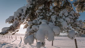 Camera moves from right to left and takes a winter landscape with tree branches and a field. stock video