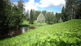 The camera moves to a grass dale in the foreground growing on the river bank in sunny summer day.  stock video footage