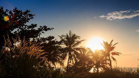Camera Moves to Grass Palm Silhouettes at Backlight of Sun stock video footage