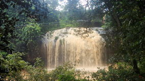Camera Moves to Wide Foamy Waterfall in Tropical Forest stock video