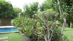The camera moves on a tropical garden with the pool lengthways the blossoming trees. Bali. Indonesia. The camera moves on a tropical garden with the pool stock video