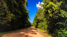Camera Moves up and down Park Ground Road Plants in Tropics. Camera moves up and down from park ground road between large tropical plants to tree tops against stock video