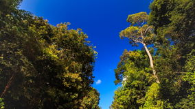 Camera Moves up and down Park Ground Road Plants in Tropics. Camera moves up and down from park ground road between large tropical plants to tree tops against stock footage