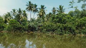 Camera is moving on a boat along sunny jungle river with beautiful lush greenery, exotic bushes and large palm trees. Idyllic view from safari ship cruising stock footage