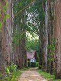 Camera nella foresta immagine stock