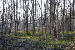Camera nella foresta Immagini Stock Libere da Diritti
