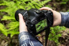 Free Camera On Hands Closeup. Making Nature Photo And Video With Green Fern Leaves Royalty Free Stock Photos - 186905798