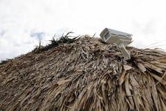 Camera op het hoogste dak van palm Royalty-vrije Stock Foto