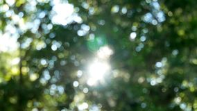 Camera pan to background and sunlight through tree green leaves. Abstract blurry bokeh nature background stock footage